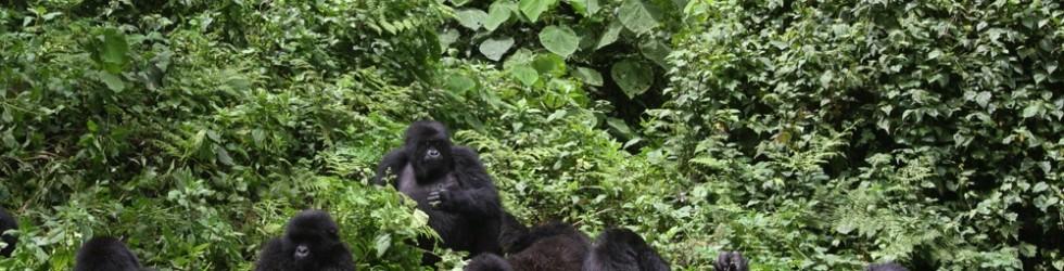Vom P-Weg in den Gorilla-Wald und zum Kirchenchor