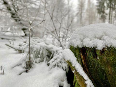 Schnee2020